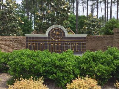 Palm Tree Cove II
