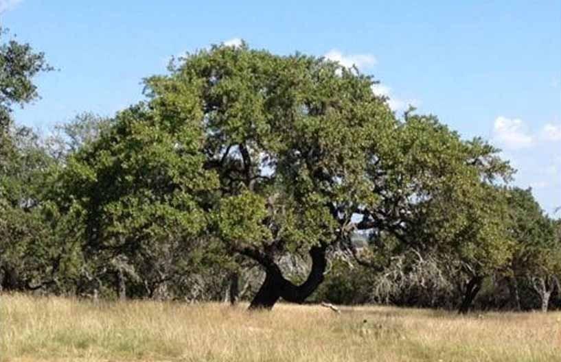PU-TX-VistaBella-TreePic-01-community-209191.jpg